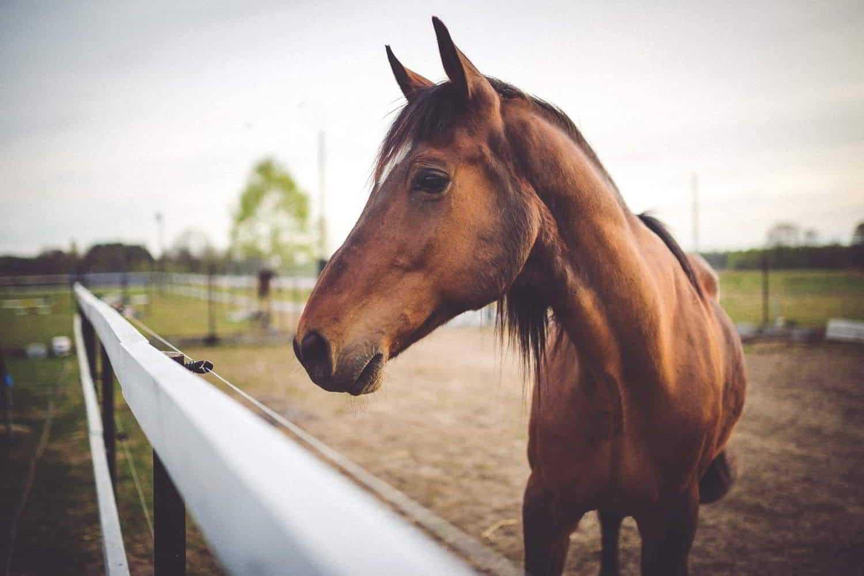 pferdesportpraxis-tierarzt-dr-matthias-keller-pferdespezialist-orthopaedische-und-manuelle-medizin-fuer-pferde-faszientherapie-chiropraktik-akupunktur-ingeneron-prp-irap-therapie-chirofasciale.jpg