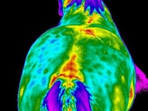 pferdesportpraxis-tierarzt-dr-matthias-keller-pferdespezialist-orthopaedische-und-manuelle-medizin-fuer-pferde-faszientherapie-chiropraktik-akupunktur-ingeneron-prp-irap-thermo1.jpg