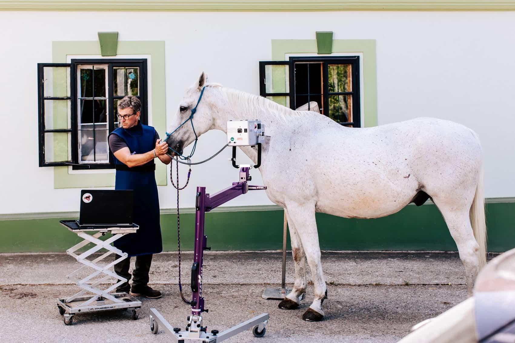 pferdesportpraxis-tierarzt-dr-matthias-keller-pferdespezialist-orthopaedische-und-manuelle-medizin-fuer-pferde-faszientherapie-chiropraktik-akupunktur-cft-prp-irap-chirofaszial-SCHTP
